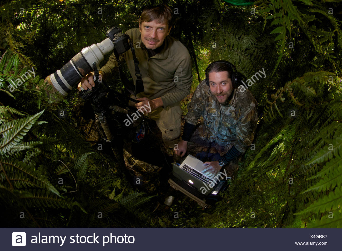 A photographer and ornithologist in a blind capture the Wahnes's parotia. - Stock Image