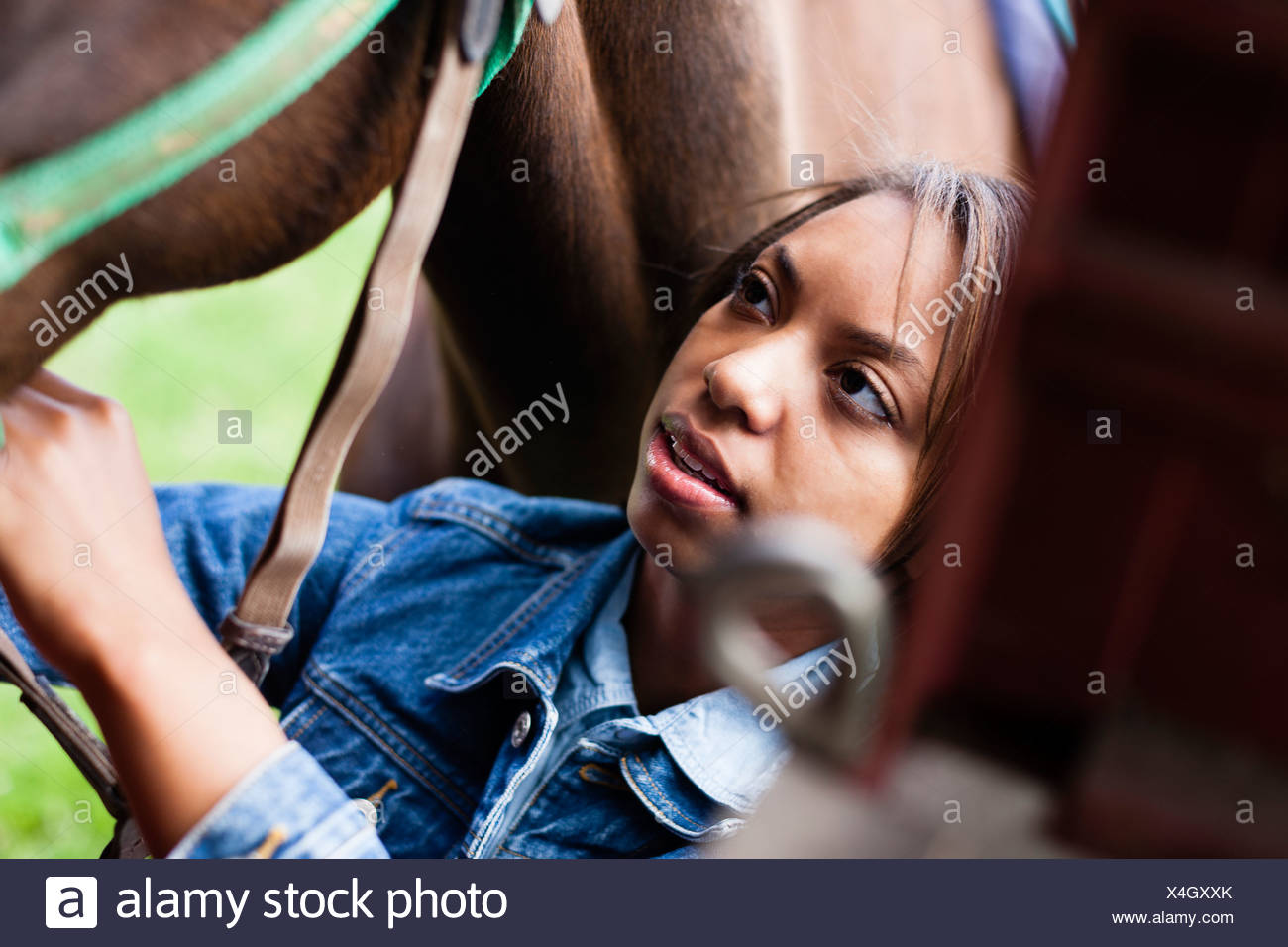 Rider grooming horse - Stock Image
