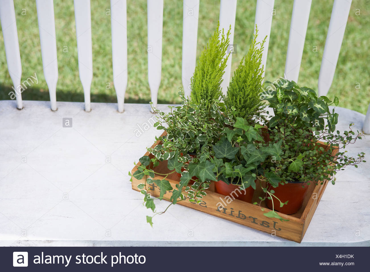 herb plant in flower pot Stock Photo