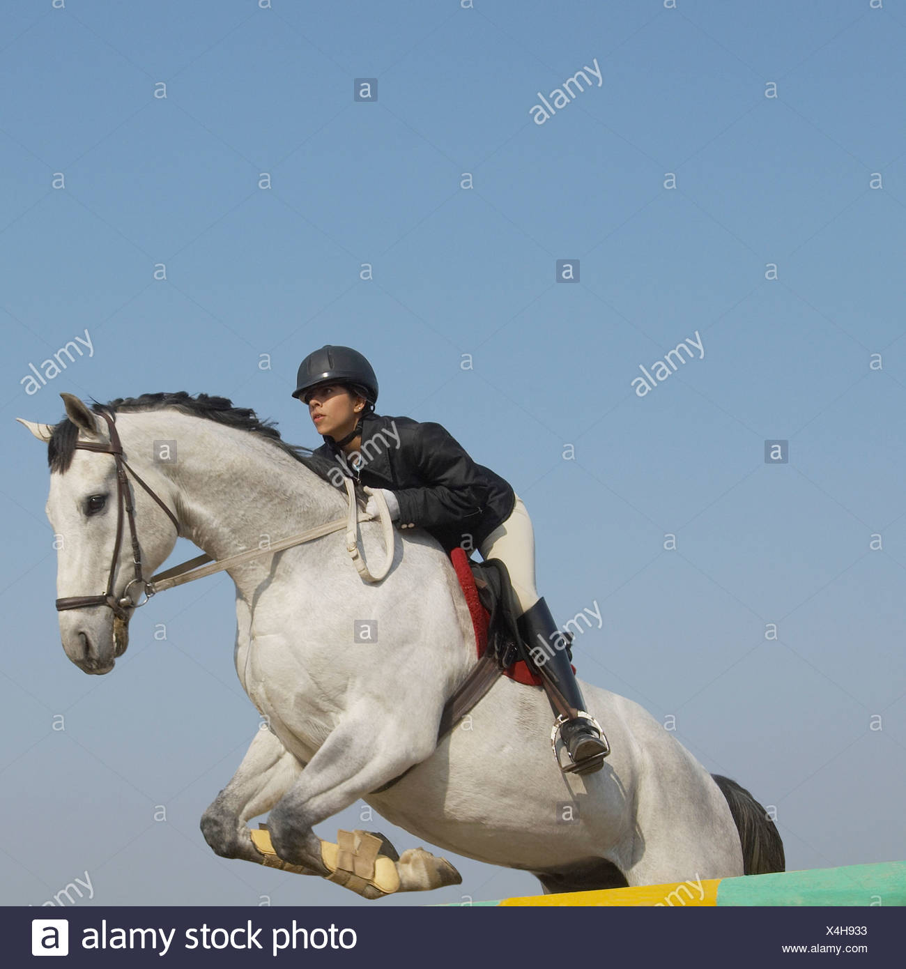 Female jockey riding a horse and jumping over a hurdle - Stock Image