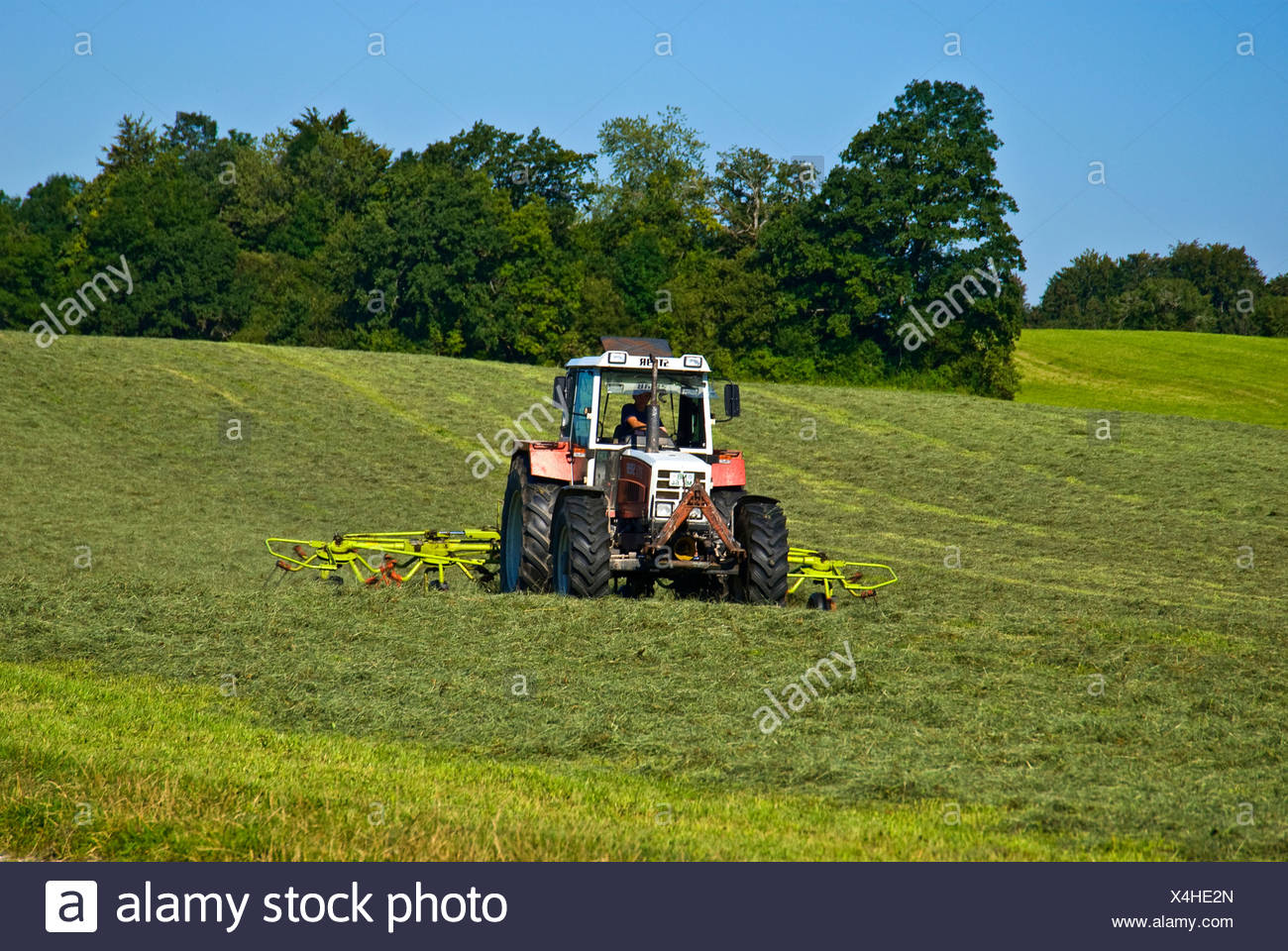 Tractor making hay on the meadows - Stock Image
