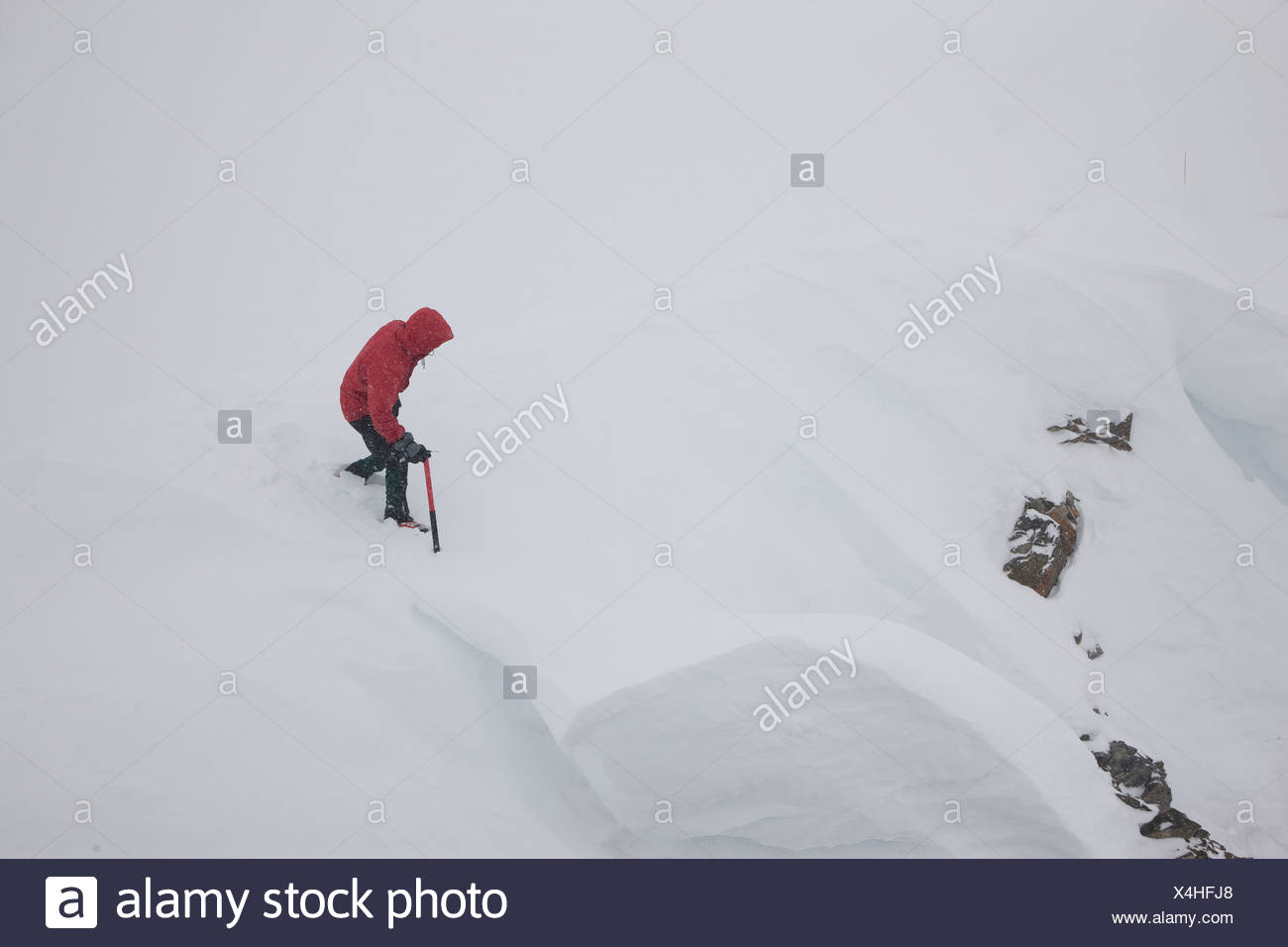 A mountaineer tests a cornice with his ice axe while glacier traveling in a snow storm in the Alaska Range, Denali National Park - Stock Image