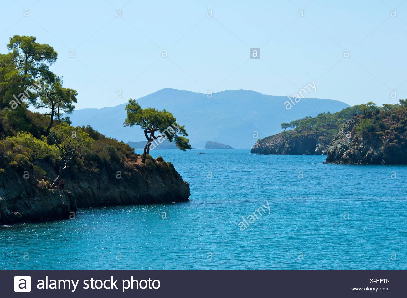 Coastal vegetation, Turkish Aegean Coast, Turkey - Stock Image