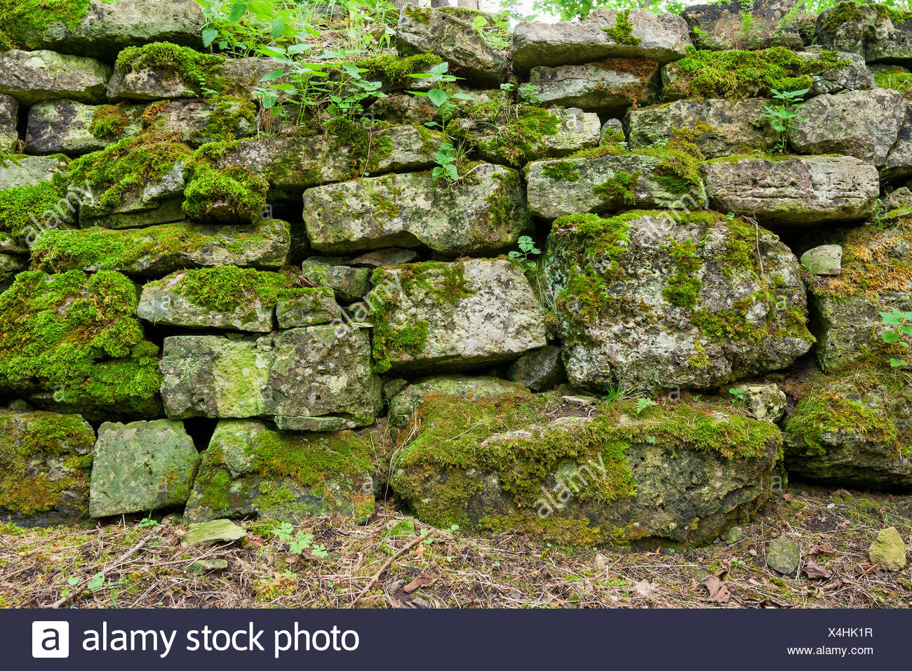 Mossy wall - Stock Image