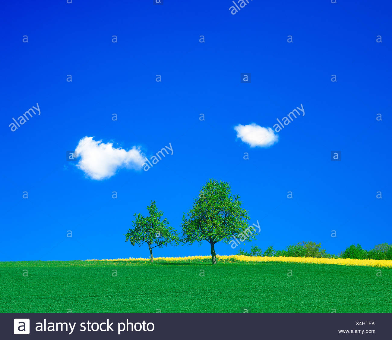 View of green field - Stock Image