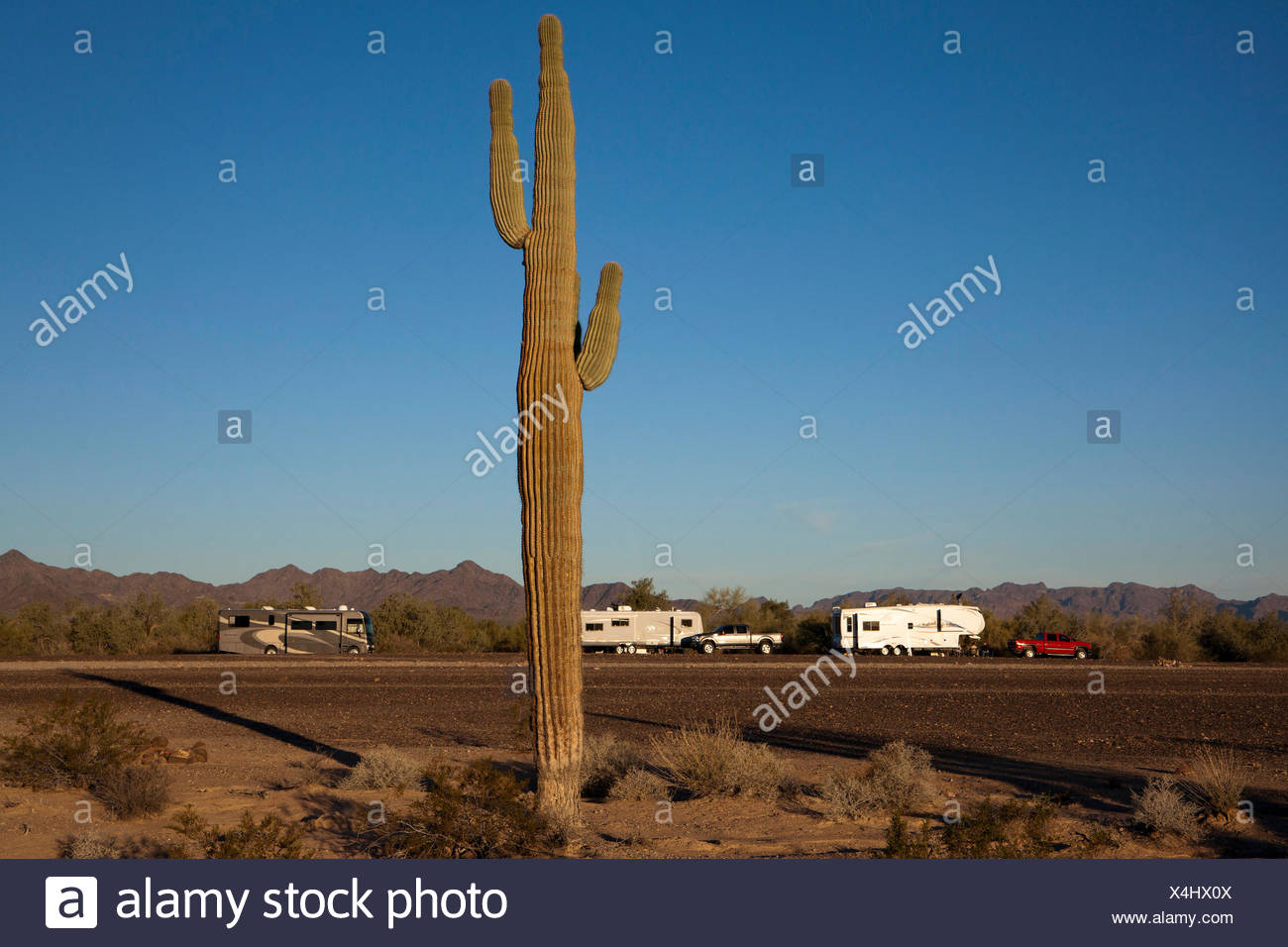 Wintertime visitors in RVs in the Bureau of Land Management's La Posa Long Term Visitor Area south of Quartzsite, Arizona. - Stock Image