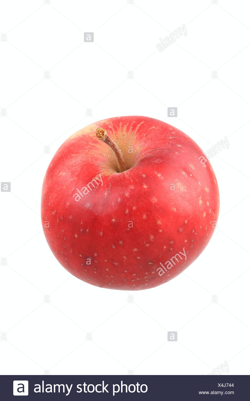 Apple, Stark Earliest variety - Stock Image