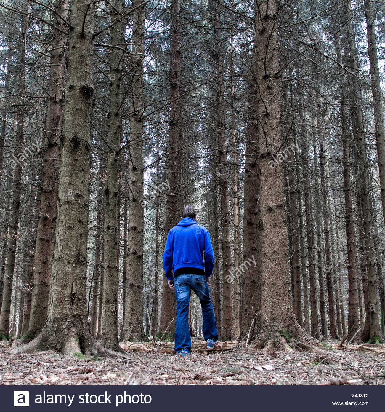 Man standing in forest - Stock Image