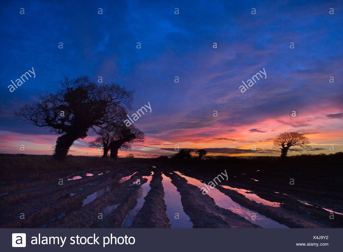 Oaks and Flooded fields. Norfolk UK. Winter - Stock Image