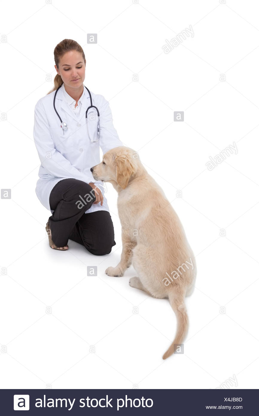 Vet knelling beside a puppy - Stock Image