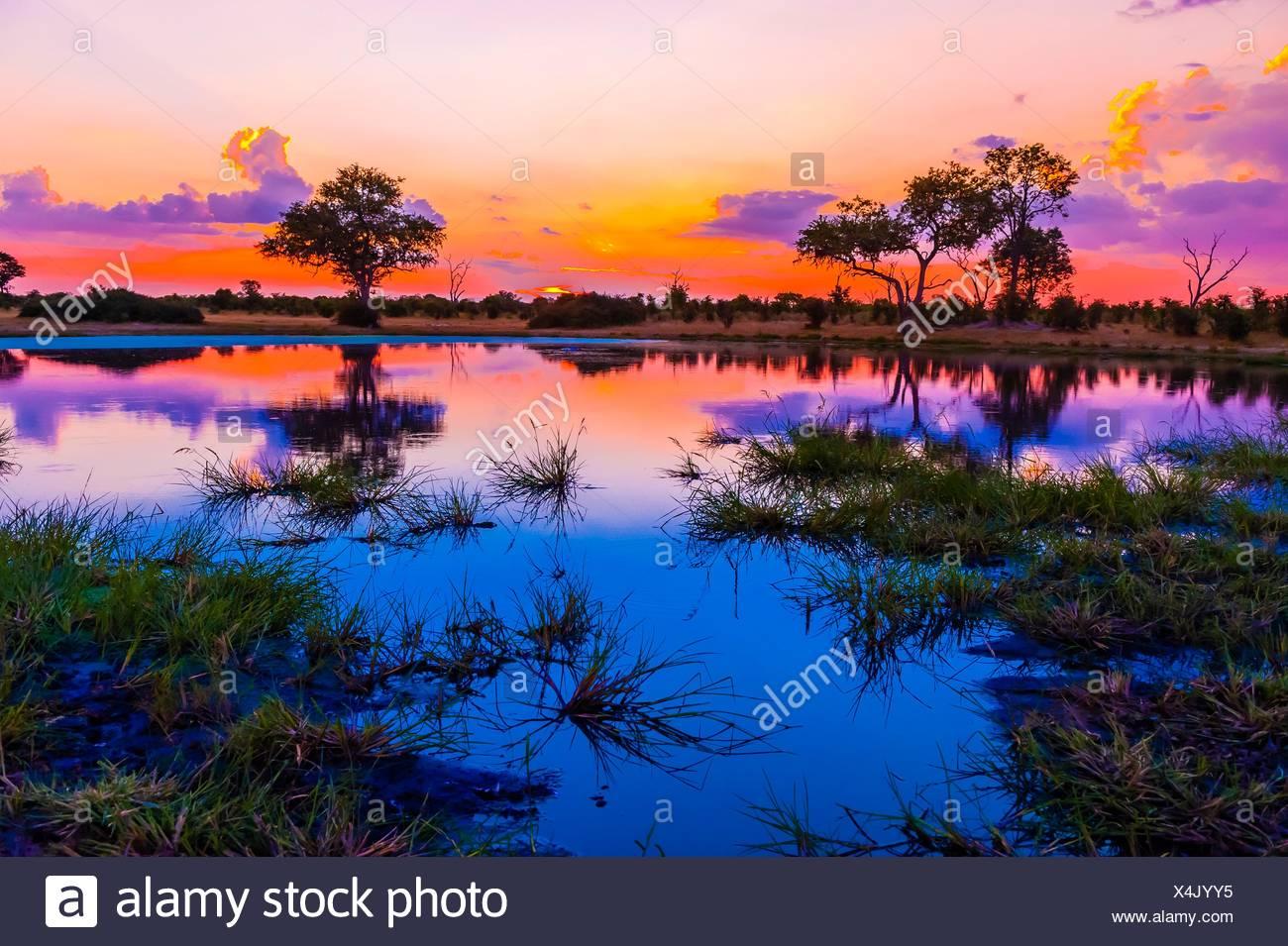 Twilight at a pond, Kwando Concession, Linyanti Marshes, Botswana. Stock Photo