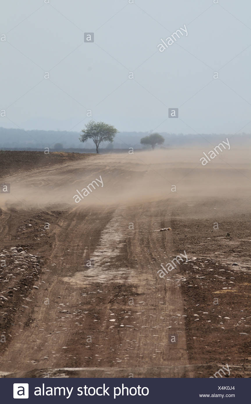 Erosion, nutrient-rich soils are being blown away by the wind from cleared areas, Gran Chaco region,  province, Argentina - Stock Image