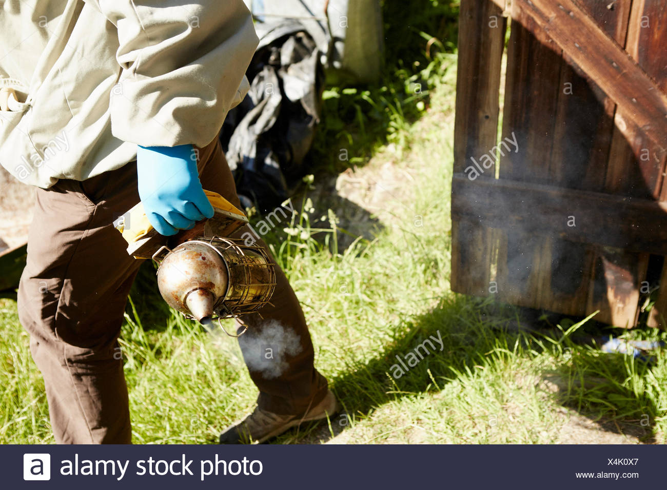 A  beekeeper in a beesuit holding a smoker on an allotment. - Stock Image