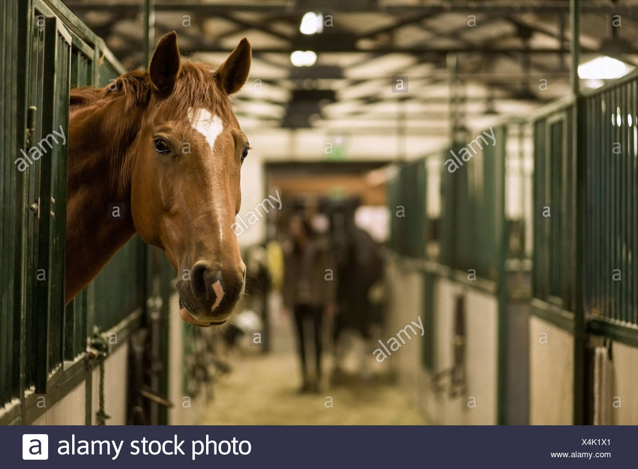 Horse in stall at stable - Stock Image