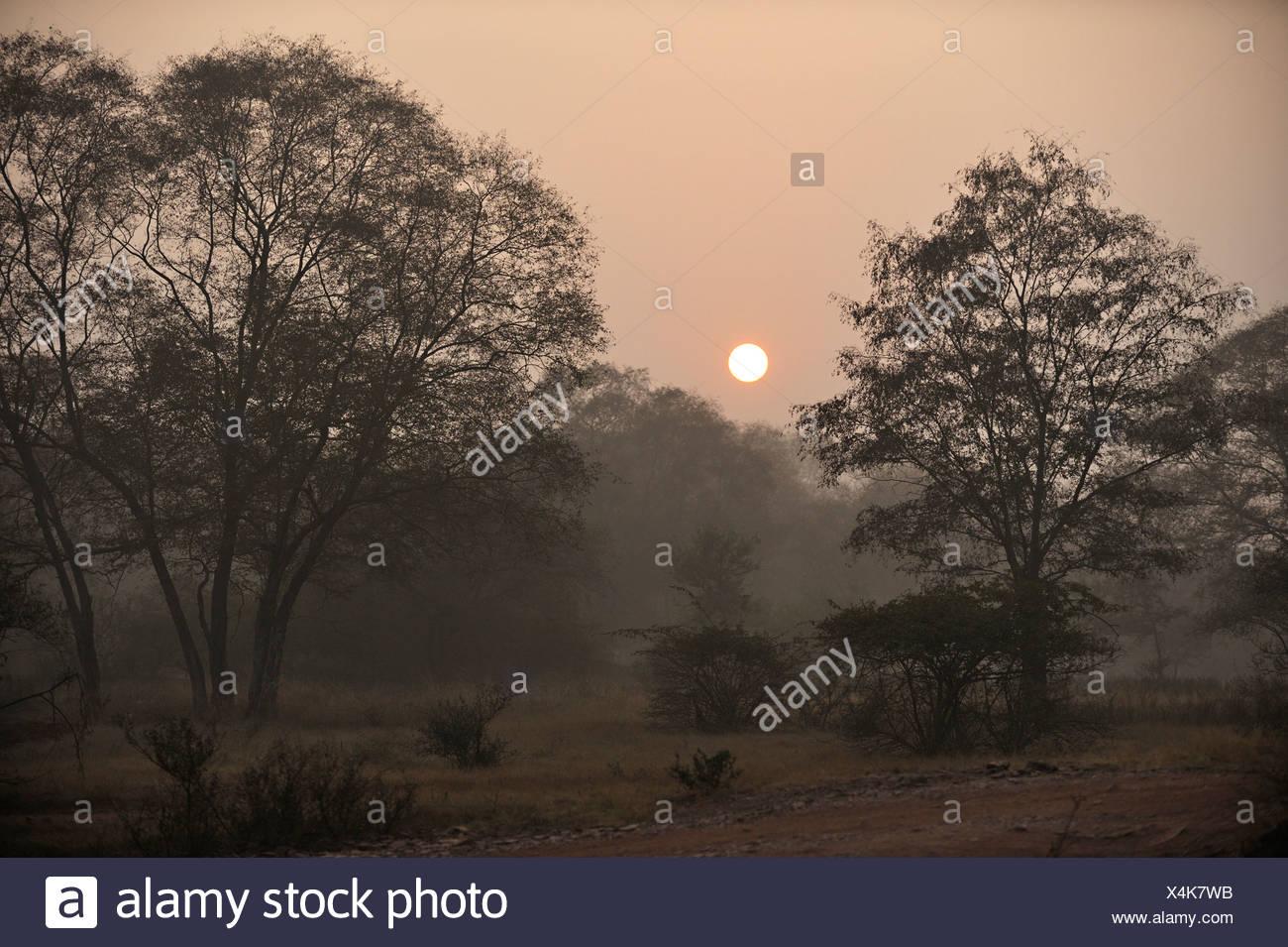 Jungles of Ranthambore National Park at sunrise, Rajasthan, India, Asia - Stock Image