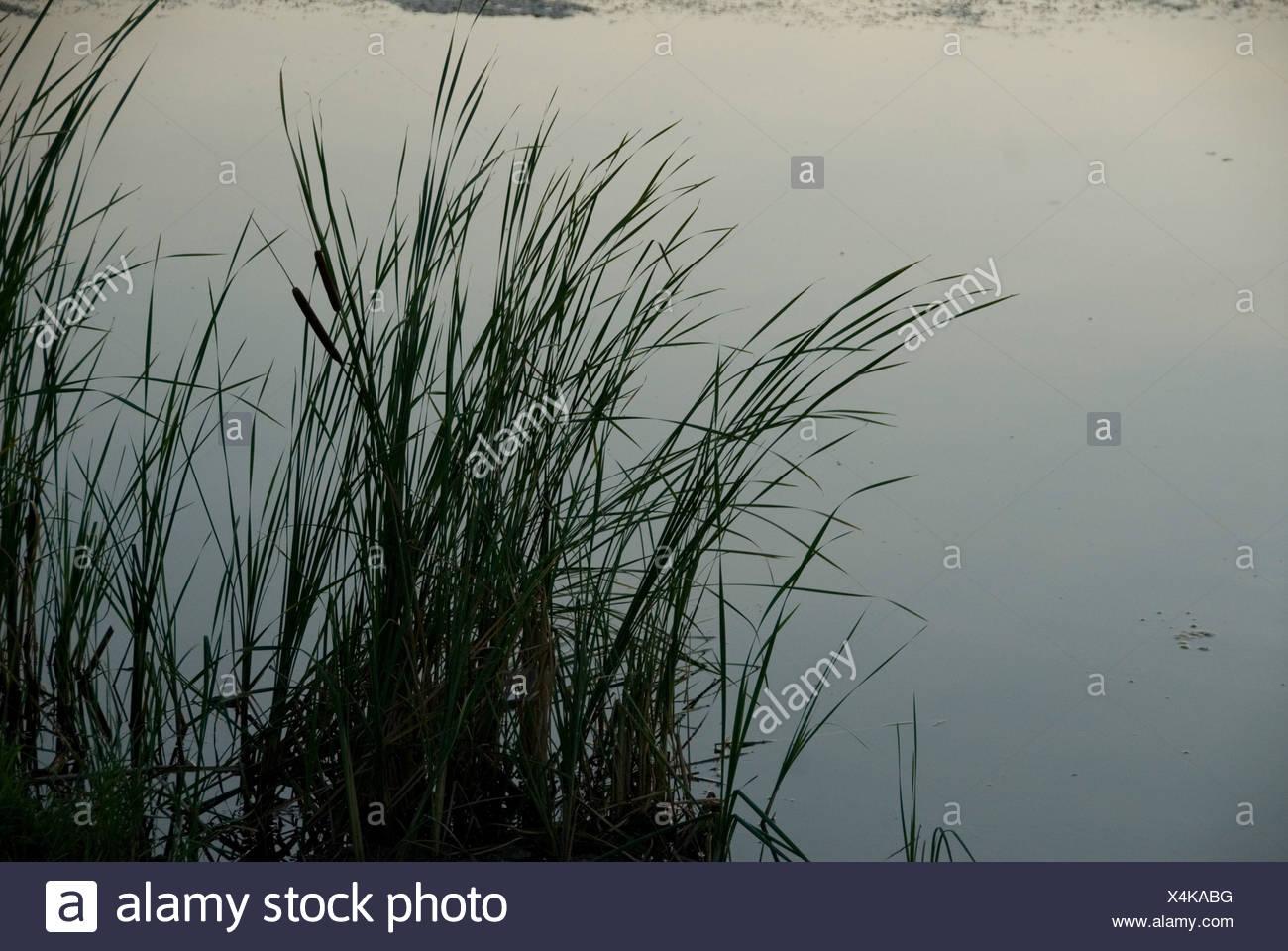 Grass grows by a body of water near Bennet, Nebraska. - Stock Image