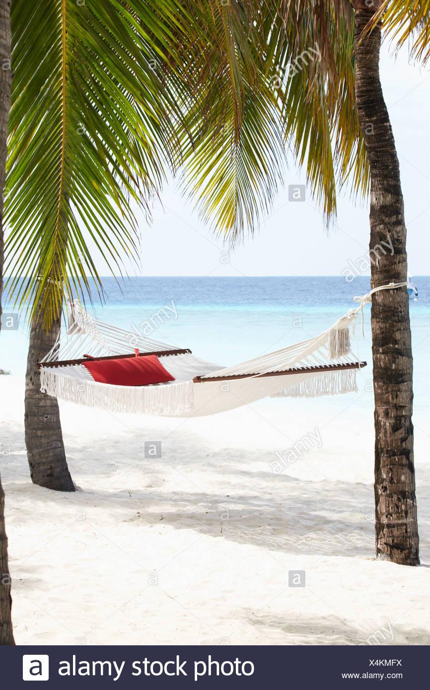 Empty Hammock Between Palm Trees - Stock Image