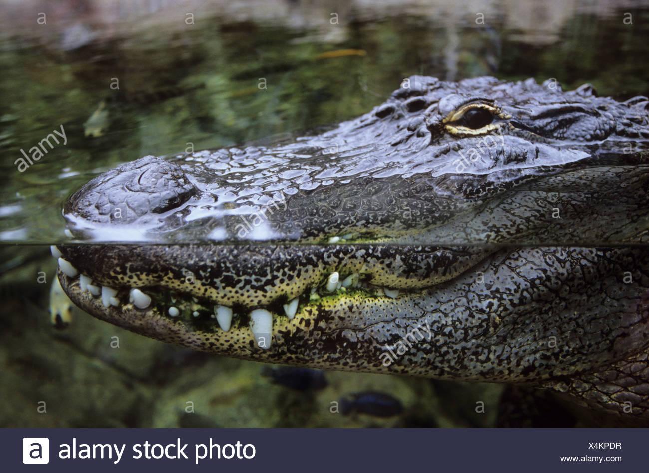 Ungewöhnlich Alligator Malvorlagen Fotos - Malvorlagen Ideen ...