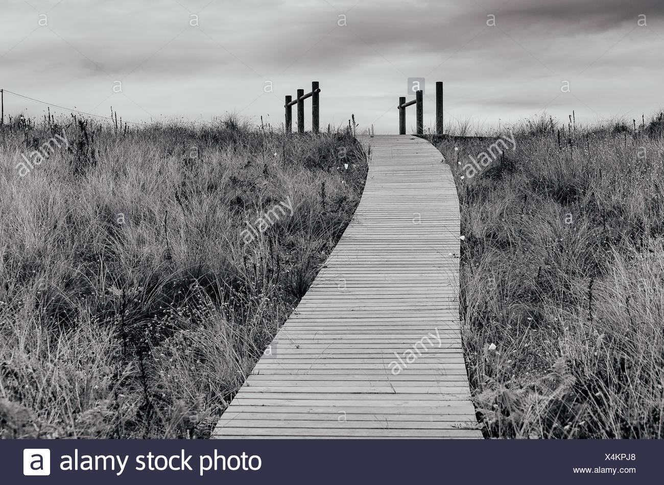 Boardwalk through grass area - Stock Image