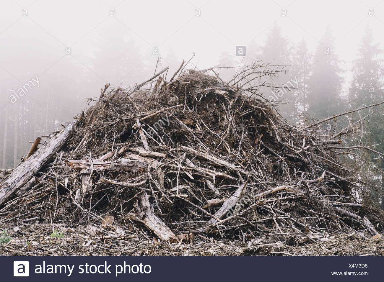 Pile of wood debris from clear cut logging Mist in the forest Calallam County Washington USA USA - Stock Image