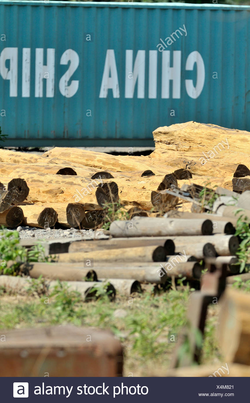 Logs from the Chaco region in front of a container labeled 'China Shipping', export of valuable tropical timber to China - Stock Image