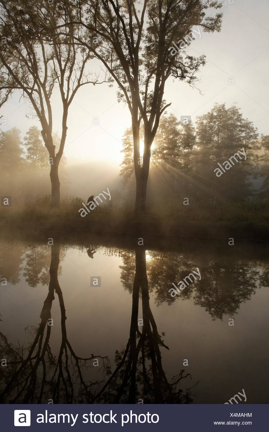 Cyclist on the towpath along the Canal des Vosges, formerly Canal de l'Est, at PK 100.5, with morning fog and morning sun - Stock Image