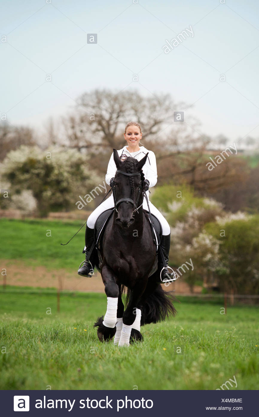 Friesian or Frisian horse, stallion, trotting with a female rider on horseback, on a meadow, classical dressage - Stock Image