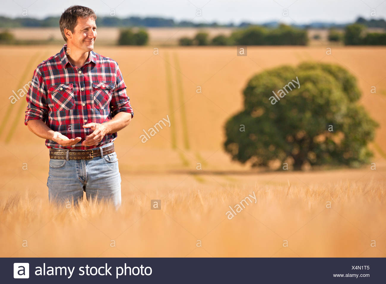 Farmer looking away in sunny rural barley crop field - Stock Image