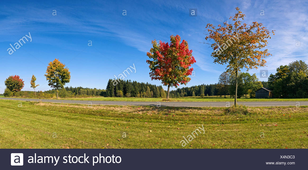 nature park Franconian Forest Stock Photo