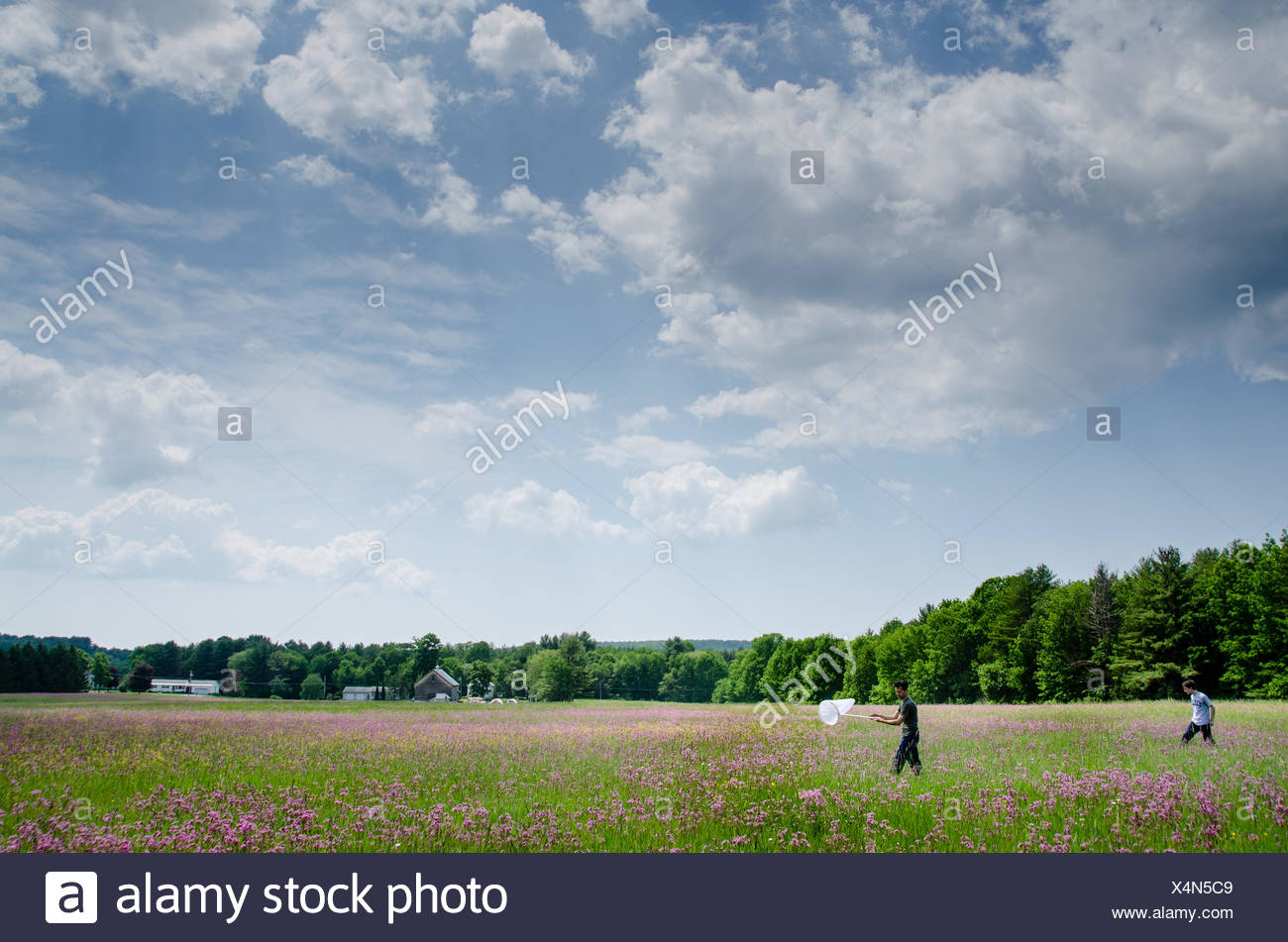 Two men wander with a butterfly net through a field with purple wild flowers under a blue sky. - Stock Image
