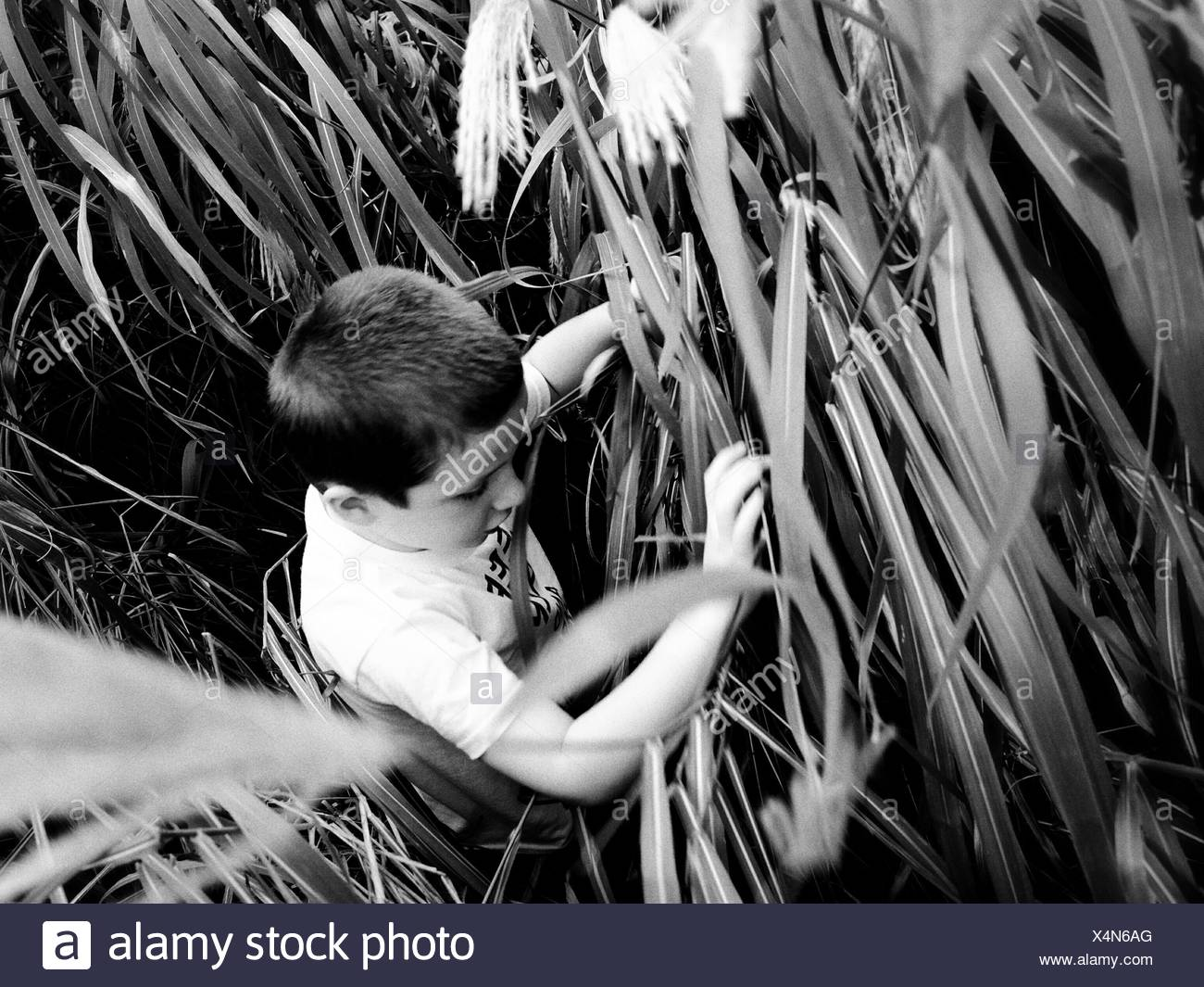 High Angle View Of Boy Walking In Grassy Field - Stock Image