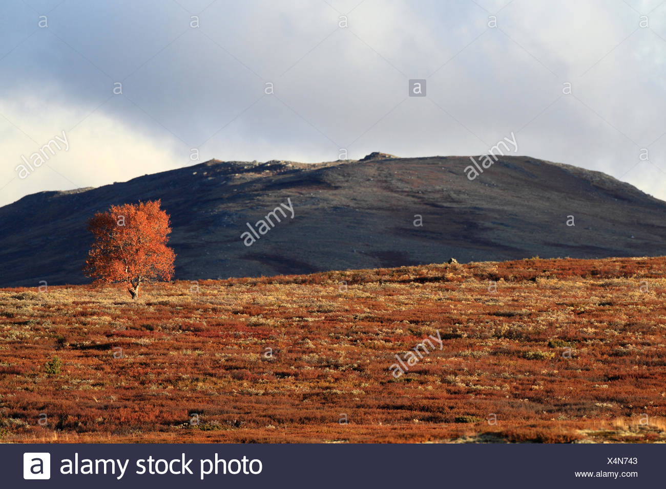 Dovre Nationalpark Norway Stock Photo