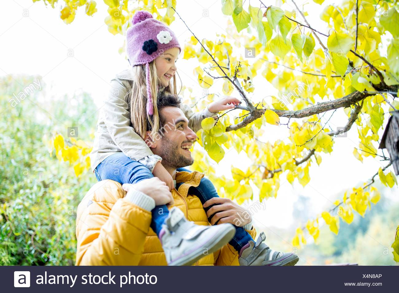 MODEL RELEASED. Father carrying daughter on shoulders and looking at branch in autumn. - Stock Image