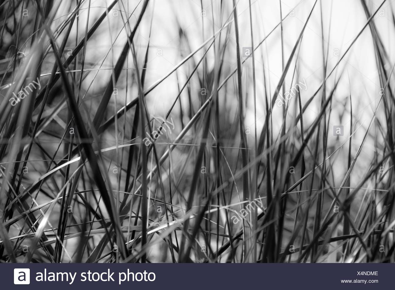 Detail Shot Of Grass - Stock Image