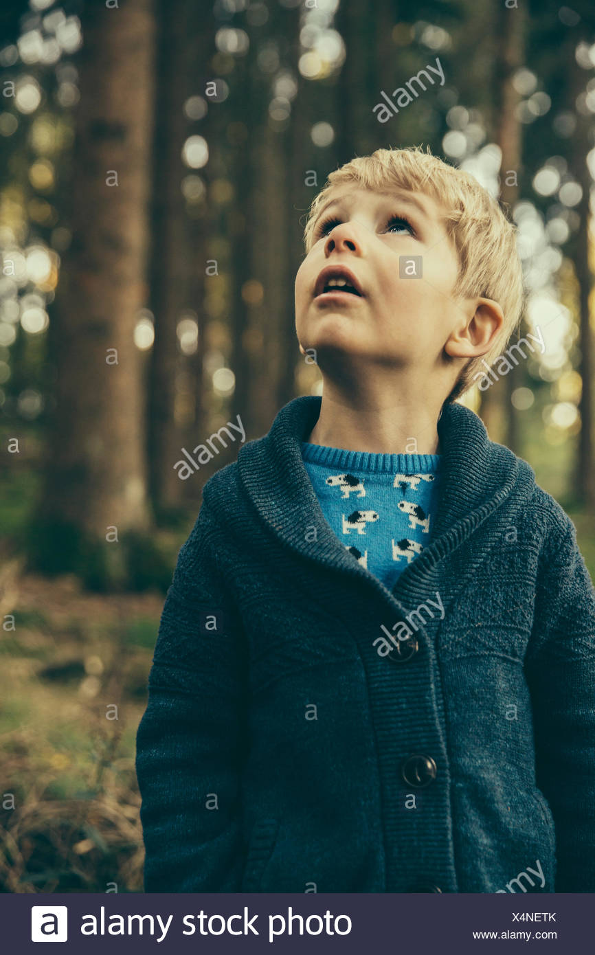 Little boy standing in forest looking up in wonder - Stock Image
