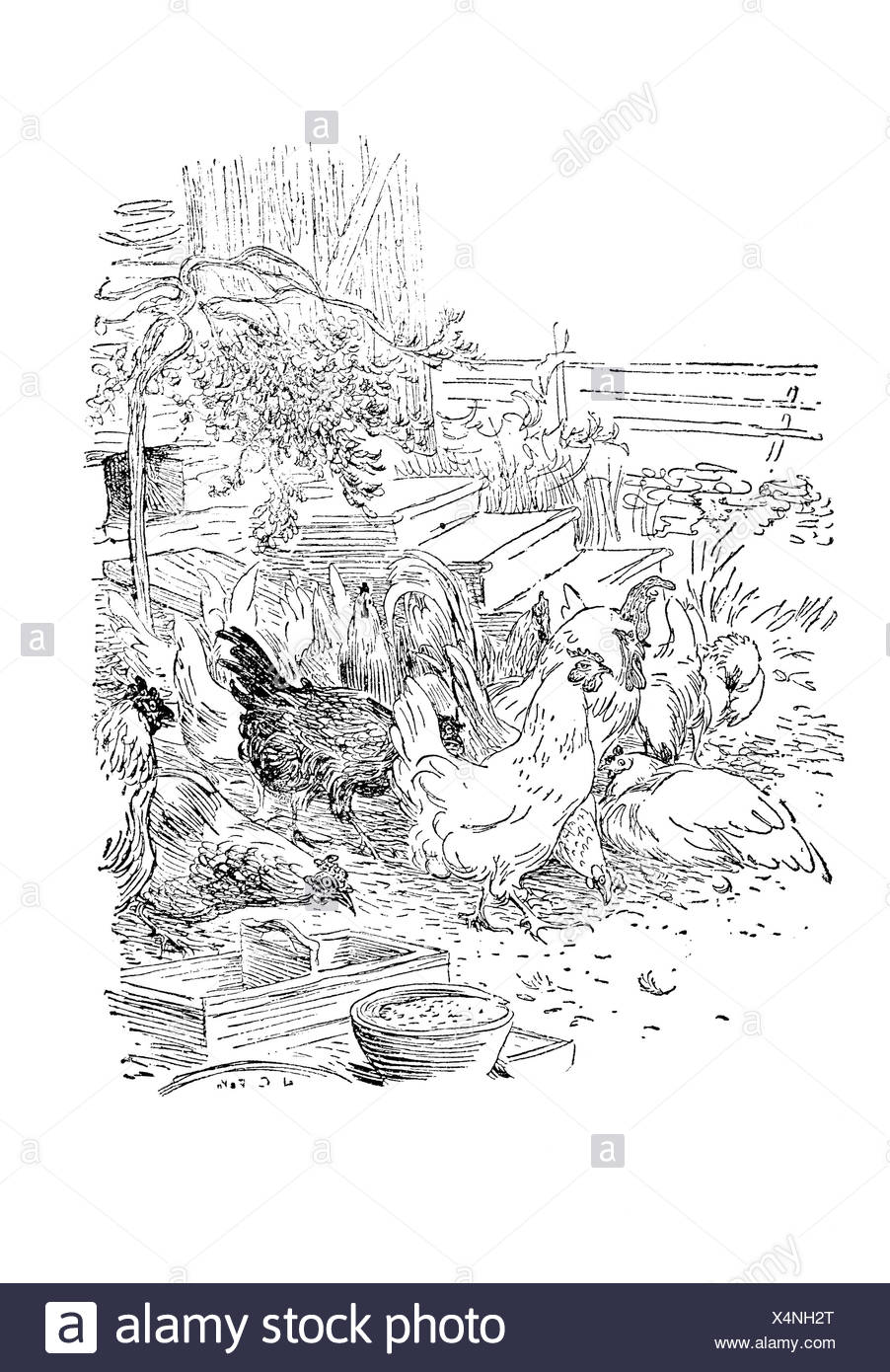 Chickens, illustration in The House in the Sun by Carl Larsson, 1917 - Stock Image