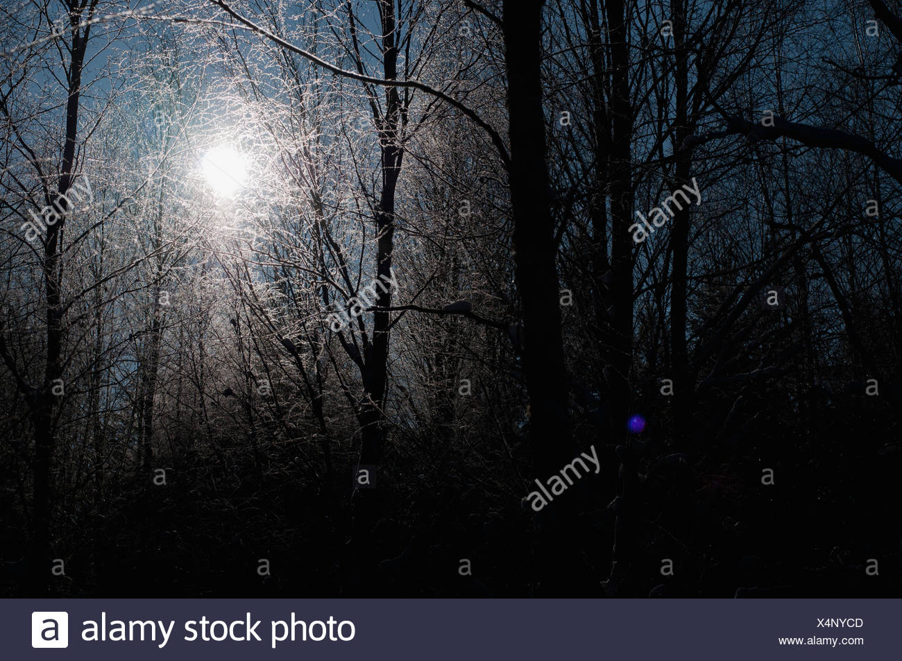 Silhouette of bare trees against sun - Stock Image