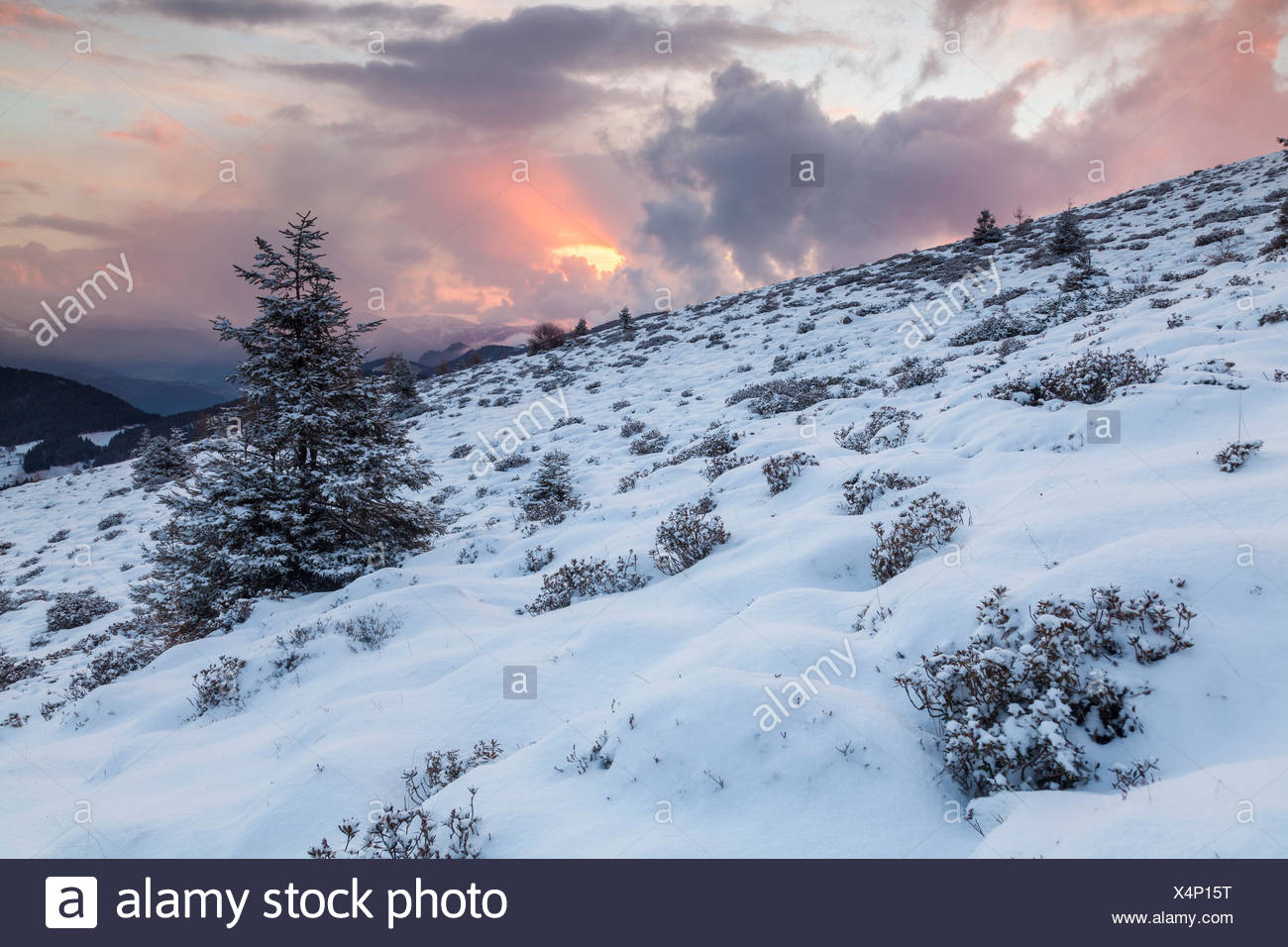 Colle of San Zeno, Trompia valley, Lake Iseo, Brescia province, Lombardy, Italy, Europe. A solitary fir with snow at sunset. - Stock Image