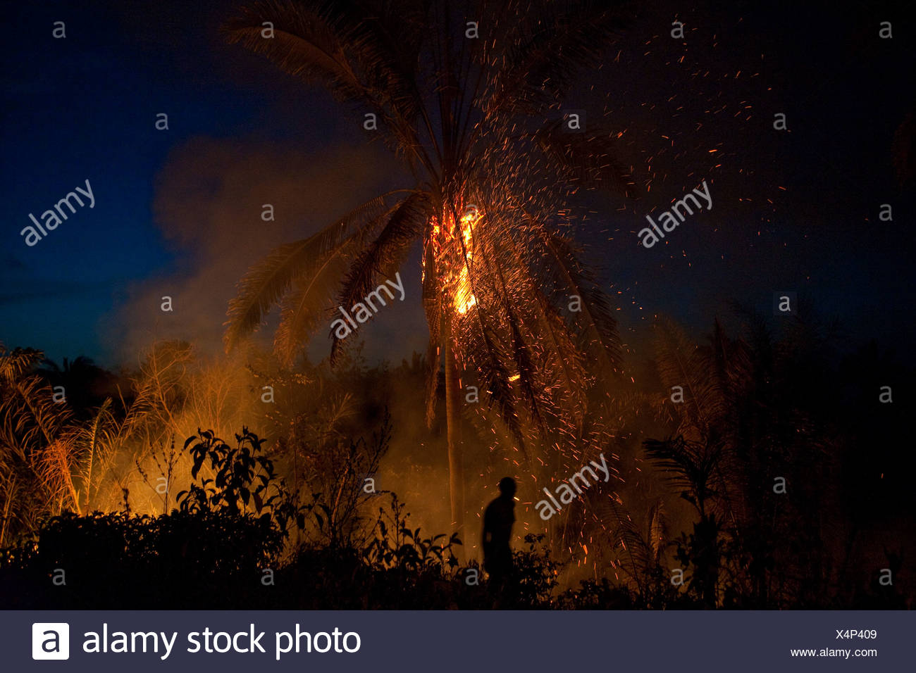 Deforestation for family farming Babaçu tree burning Clearance of land with of natural resources for agriculture Quilombo Brazil - Stock Image