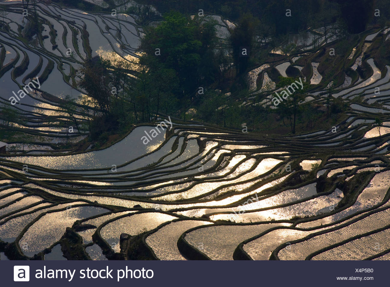 Yuanyang, China, Asia, rice terraces, growing of rice, rice fields, agriculture, water, trees, spring, reflection - Stock Image