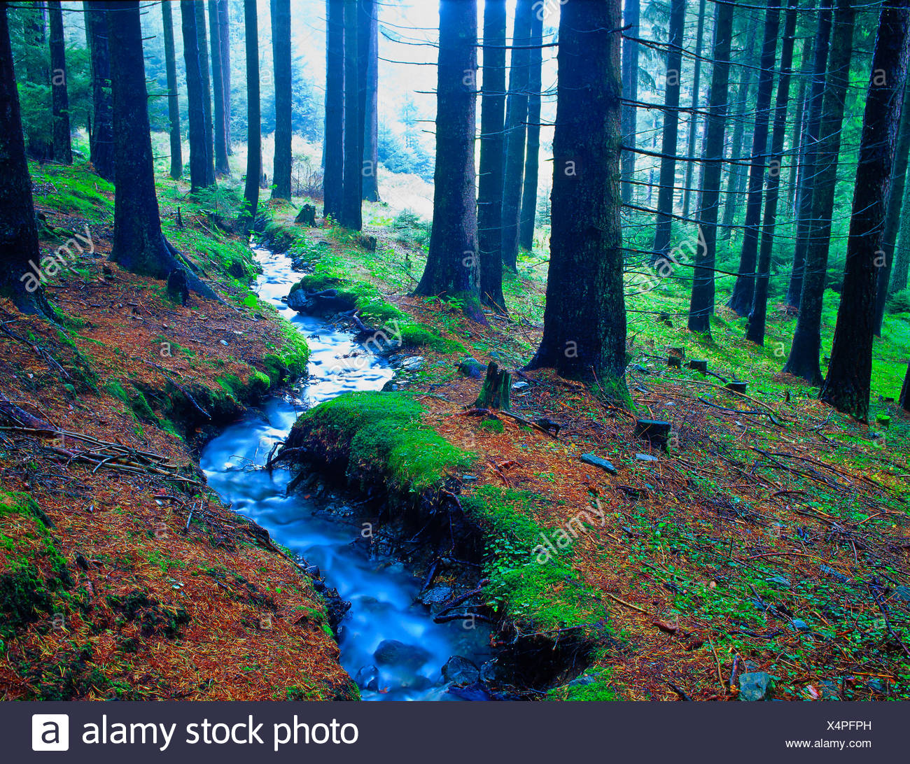 Austria, Europe, Tyrol, Sistrans, wood, forest, spruces, spruce forest, trees, water, little brooks, brook, flowing, blurred, Mi - Stock Image