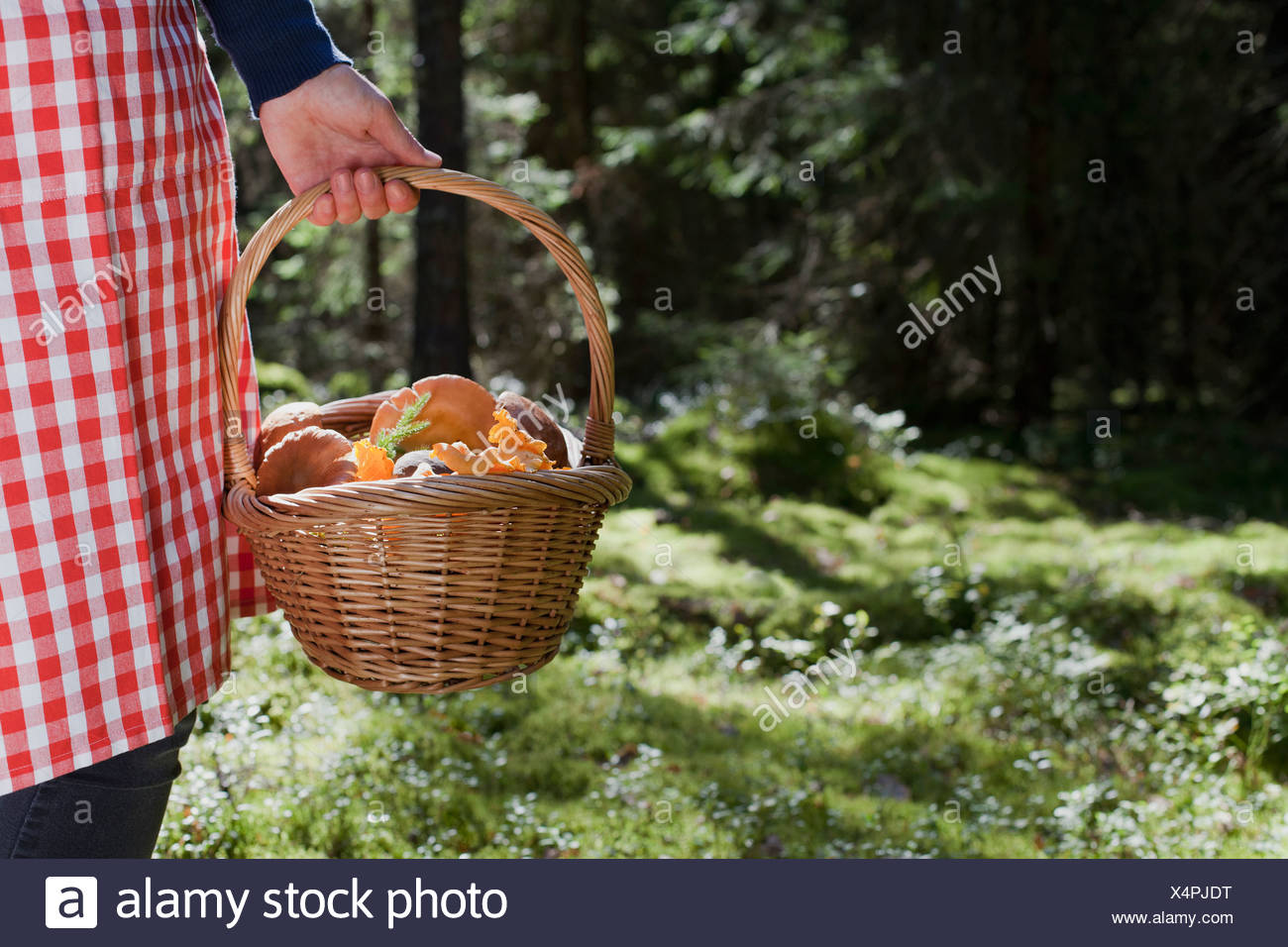Woman with basket of mushrooms in forest Stock Photo