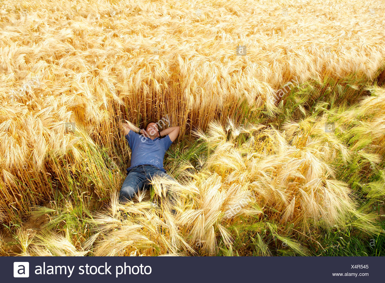 Man laying down in a wheat field Stock Photo