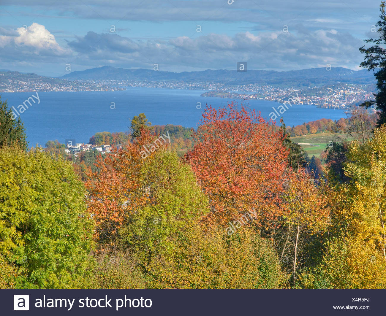 Trees, leaves, autumn, canton Zurich, Switzerland, autumn trees, colors, leaves, Wadenswil - Stock Image