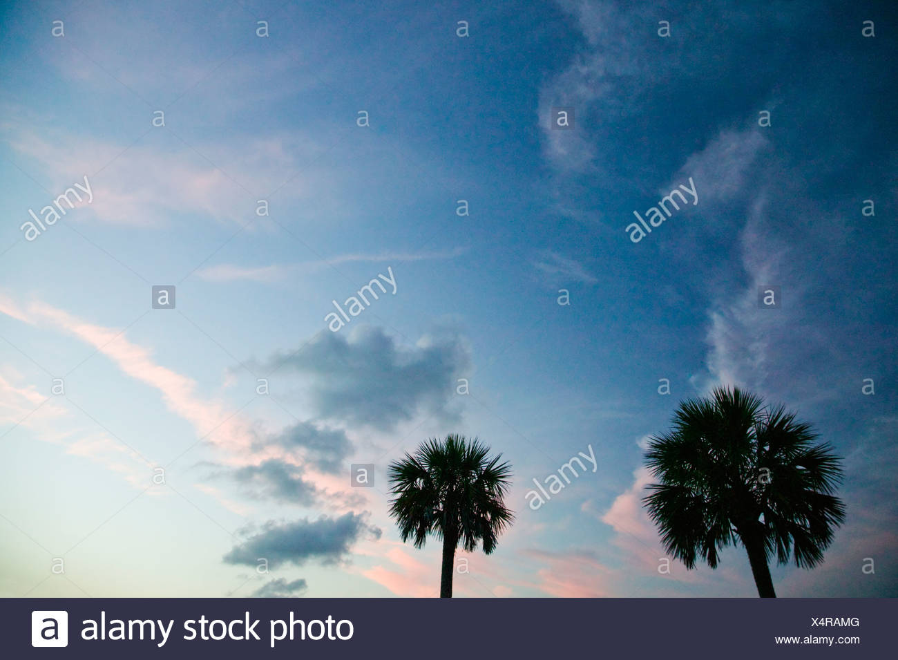 North America, USA, South Carolina, Silhouette of trees at dusk in park - Stock Image