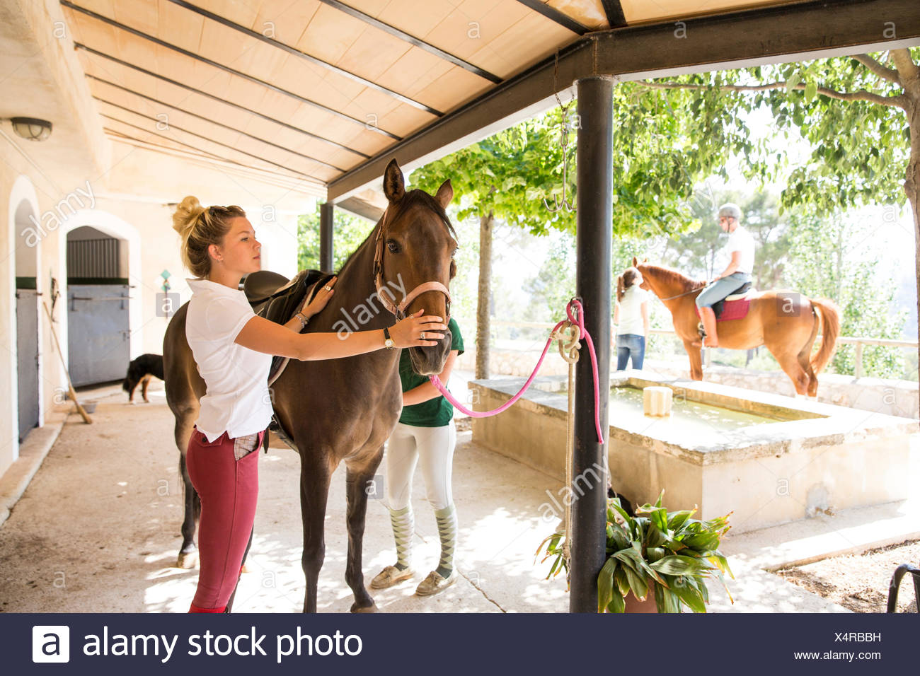 Female grooms with horse at rural stables - Stock Image