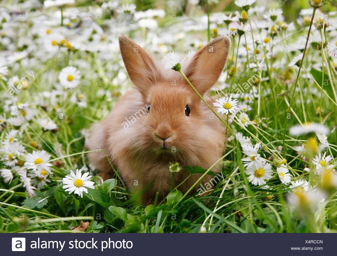 Rabbit Stockholm - Stock Image