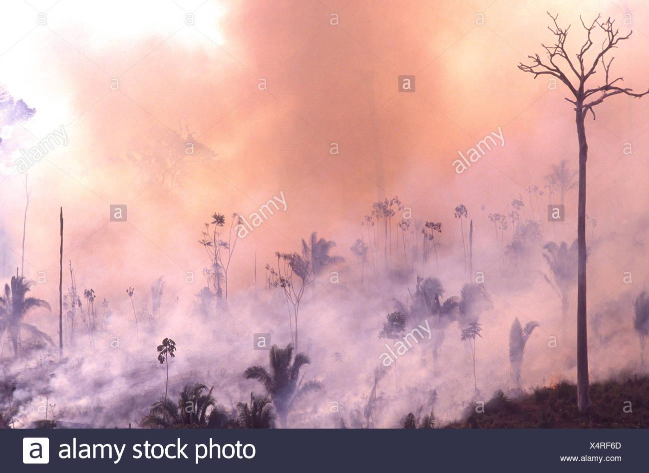 Amazon rain forest burning Deforestation Brazil Burned trees ecological umbalance land clearance - Stock Image