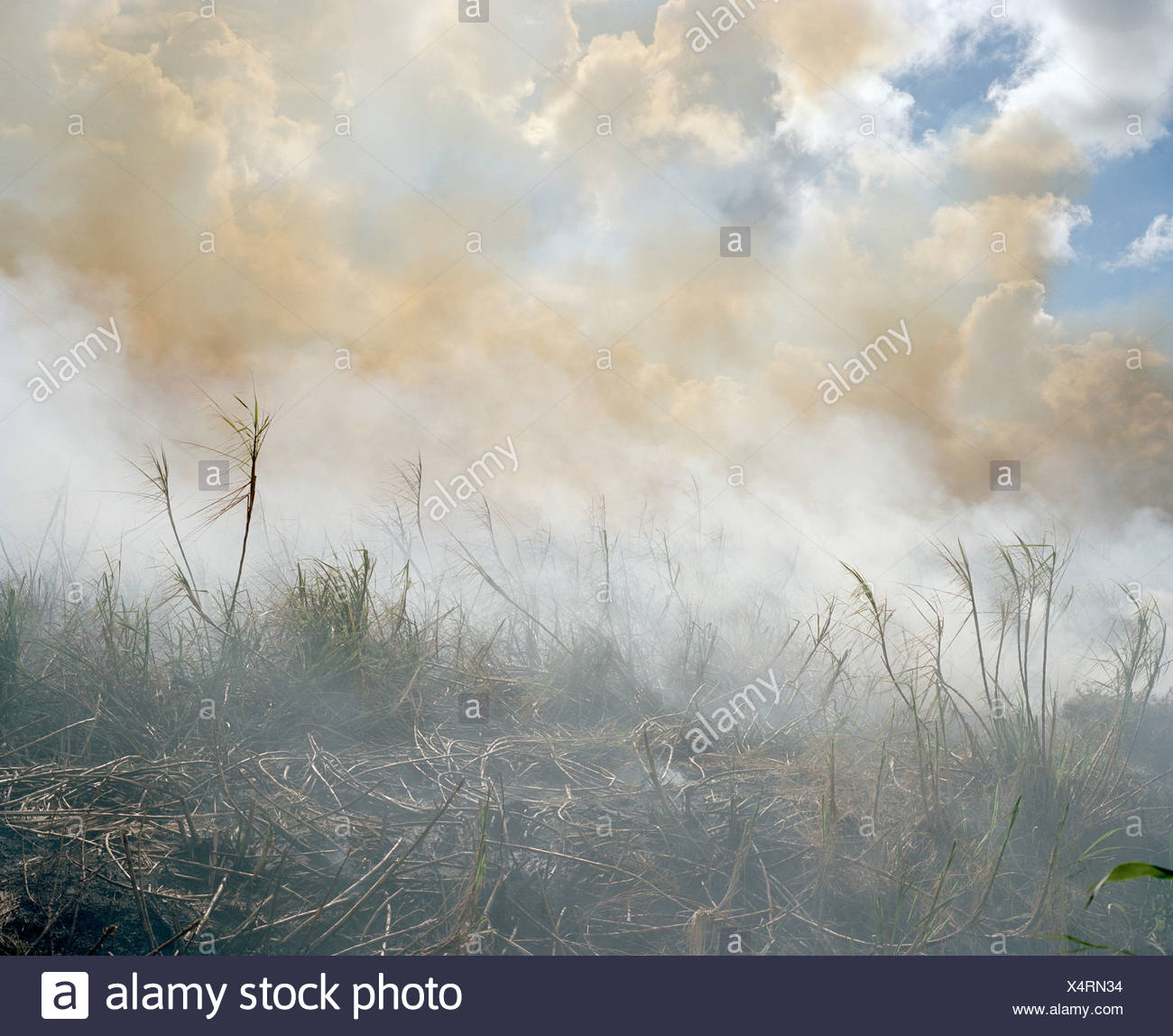 The aftermath of a brush fire - Stock Image