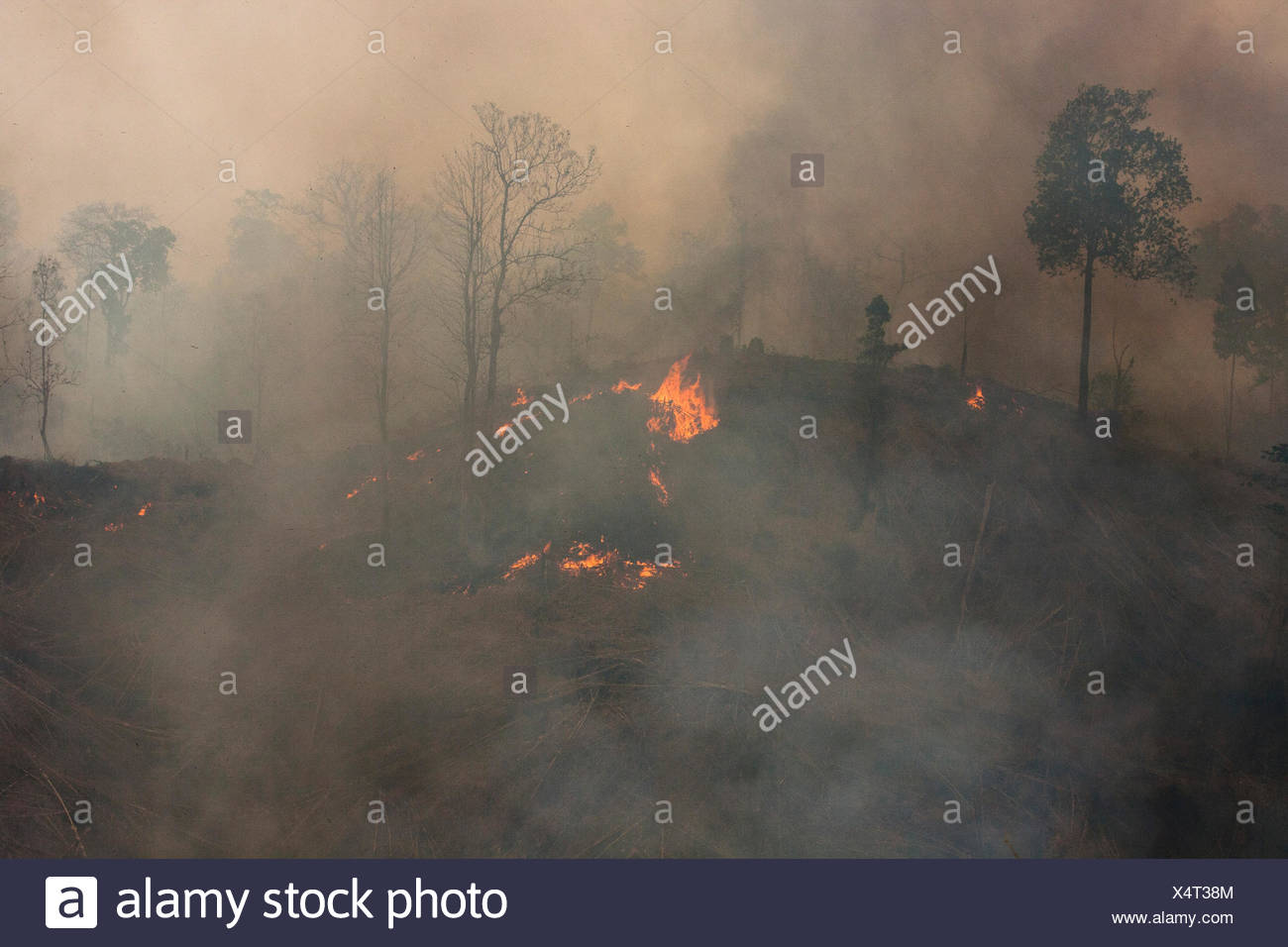 Deforestation of the primary forest in the Taungoo area by fire to instal teak plantations, Burma Stock Photo